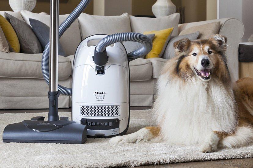 Kjæledyr i hjemmet